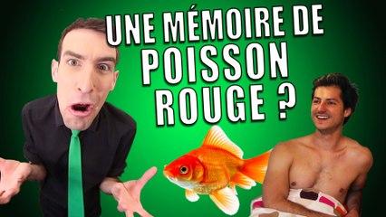 IDÉE REÇUE #11 : La mémoire du poisson rouge (feat. Nicolas Meyrieux)