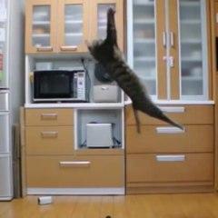 Ce chat ferait un bon gardien de but !