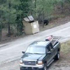 Sauvetage d'oursons
