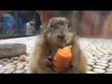 Slow Motion Video of Squirrels Eating Carrots