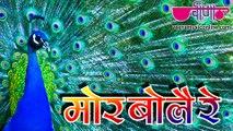 Best Rajasthani Folk Song 2016 | Mor Bole Re Full HD | Latest Rajasthani Sawan Song