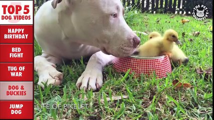 Incredible Dog Videos of the Week Compilation 2016