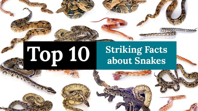 Top 10 Striking Facts about Snakes