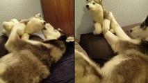 Deux chiens qui s'amusent ensemble