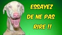 ESSAYEZ DE NE PAS RIRE SPECIAL ANIMAUX