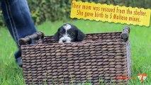 Ces petits chiens vont vous donner une très belle leçon de vie !
