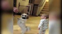 bebe et chien qui danse