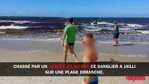 Un sanglier surgit de l'océan et sème la panique sur une plage ,,,,