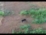 Drone Captures Rare Black Bear Sighting in Corydon, Indiana