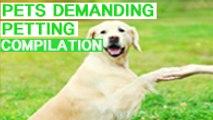 PETS DEMAND PETTING COMPILATION