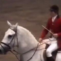 Le record du monde de saut à cheval