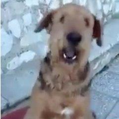Este cachorro sabe contar!
