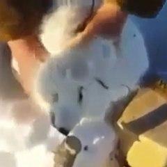 A raposa mais esperta!