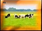 Hou van Holland - aflevering 17