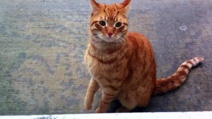 Ce chat errant cherche juste quelqu'un qui l'aime... Et comment pourriez-vous dire non à cette bouille?! Regardez.