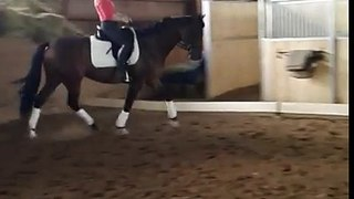 Bold Verona 3rd Level Dressage Gelding for Sale