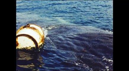 Le Cinéma de Mario Ruspoli - Les Hommes de la baleine - Extrait 1