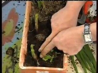 Visionnez les Cours Vidéo de Ciboulette- Conseils de Jardinage