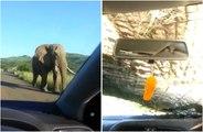 Une rencontre avec un éléphant tourne très mal lors d'un safari !
