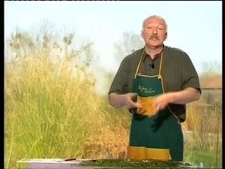 Gazon - Conseils de Jardinage