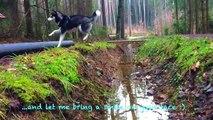 Husky Kenji springt wie irre durch ein Feld ) d-- FUNNY HUSKY I KENJI ☆ I ellylicious♡