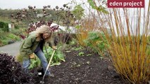 10 tips for gardeners in November from the Eden Project