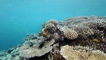 """La Minute du Parc naturel marin de Mayotte - """"La passe en S,  un espace protégé à reconquérir  """""""