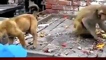 Viral Video of a Monkey Annoying a Dog  Animals Videos Monkey vs dog.