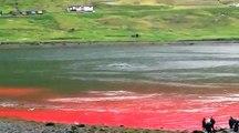 Nouveau massacre de dauphins aux îles Féroé