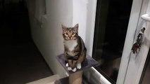 mon chat qui danse  trop drôle !