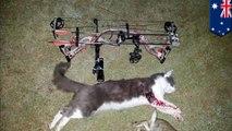 Un groupe de tueurs de chats publie des photos de leurs victimes
