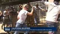 California: exotic animals displaced by Sand Fire return to sanctuary after evacuation