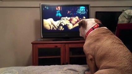 Khaleesi, le chien le plus cinéphile au monde