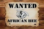 African Honey Bees: Public Enemy #1