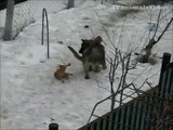 cats and dogs. fights