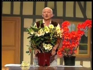 Visionnez les Cours Vidéo de Rhododendron- Conseils de Jardinage