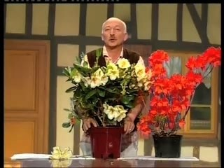 Rhododendron- Conseils de Jardinage