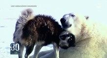 L'amitié étonnante entre un ours polaire et un chien ! - ZAPPING TÉLÉ DU 28/07/2016 par lezapping