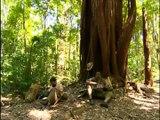 DVD 5- Amazônia, de Galvez a Chico Mendes - Delzuite (Parte 2)