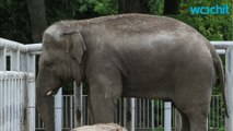 Elephant Kills Young Girl After Throwing Rock in Morocco Zoo
