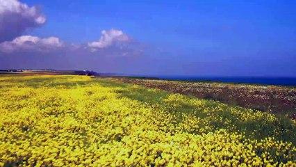 Sale Temps pour la Planète Normandie la nature fait sa loi