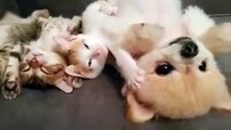 Ce chiot ne veut pas réveiller les chatons, donc regardez ce qu'elle fait...