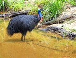 Top 10 Amazing Flightless Birds In The World