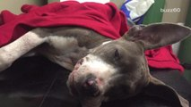 Puppy Nearly Euthanized Given Second Chance at Life
