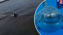 Shark attack: Great white shark encounter is close call for Australian kayaker - TomoNews