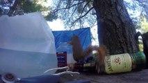 Écureuil pris en flag de vol de cacahuètes!