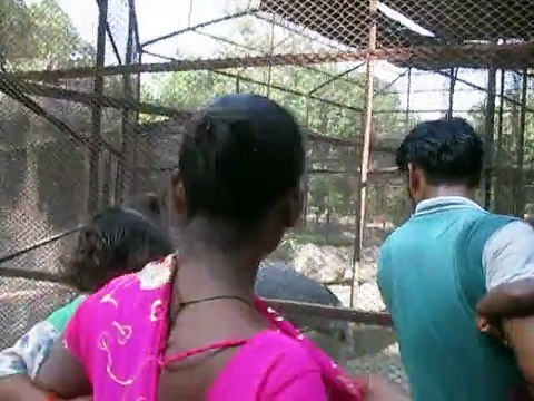 we saw a beautiful foreign bird in the cage,it has amezing looks