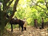 DVD 6- Amazônia, de Galvez a Chico Mendes - Delzuite (Parte 1)