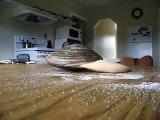 Ecco una vongola che mangia il sale su un tavolo: