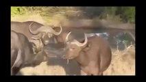 15 CRAZIEST Animal attacks Caught On Camera #2 - Most Amazing Wild Animal Attacks